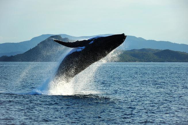 Whaleshutterstock