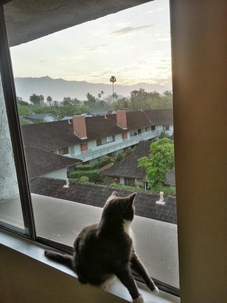 Cat_window_1_medium