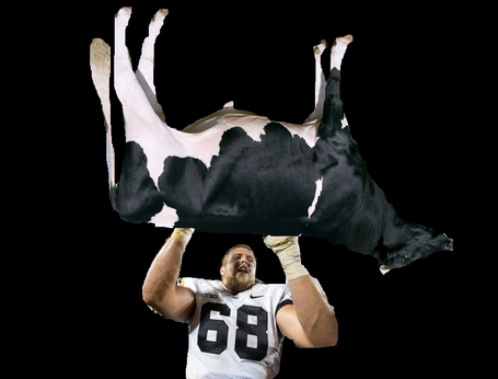 Scherff_cattle_thief_medium