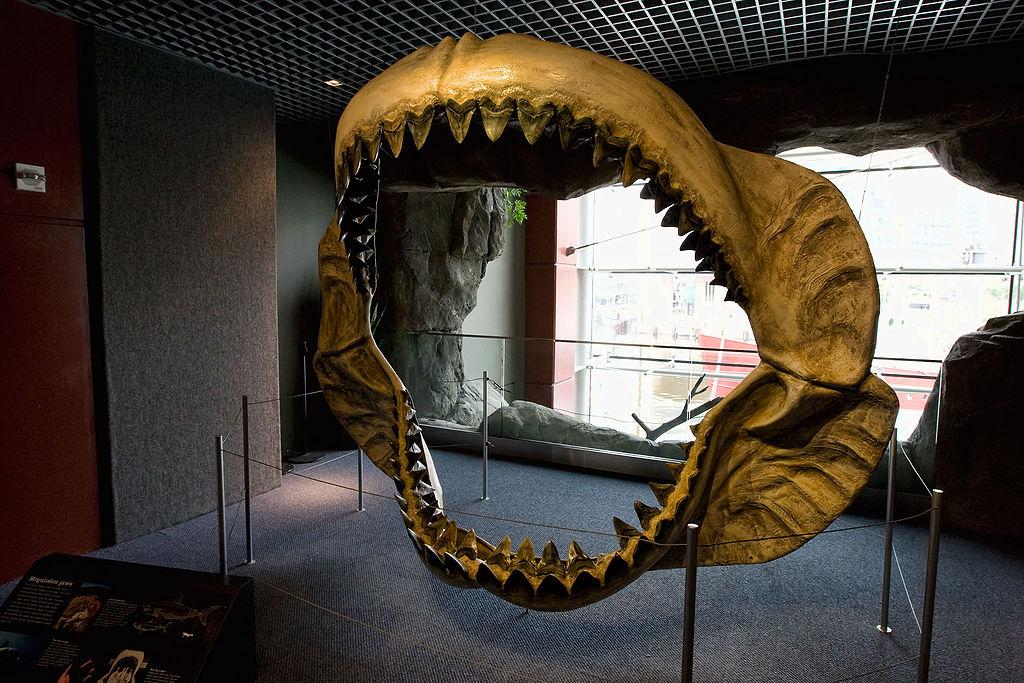 1024px-megalodon_jaws_on_display_at_the_national_baltimore_aquarium