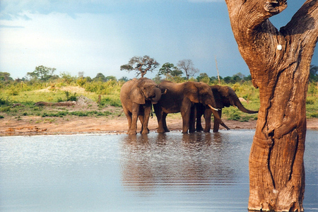 elephant water hole (wikimedia)