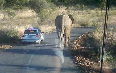 Elephant_1656207c