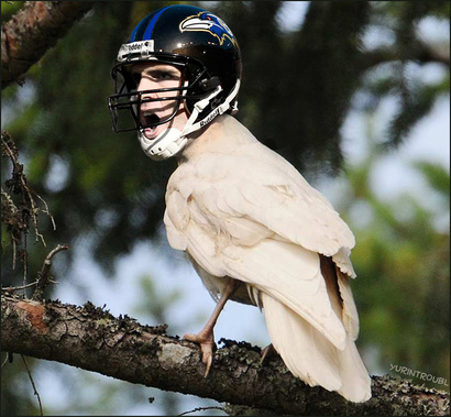 Nfl___flacco_albino_raven_by_yurintroubl