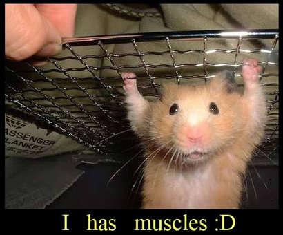 Musclehamster