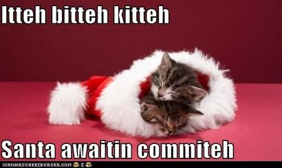 Funny-pictures-itteh-bitteh-kitteh