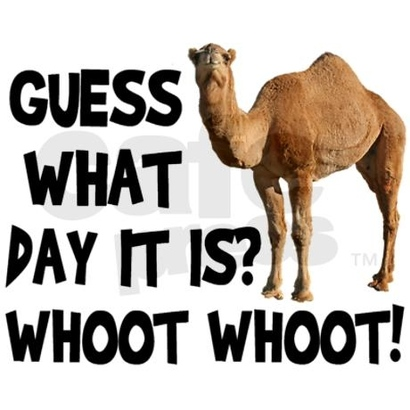 45972-hump-day-camel
