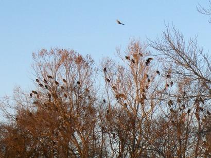 Vulturesinkisseemills