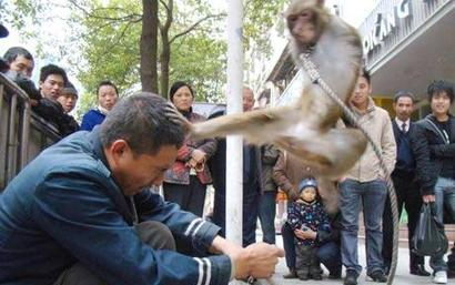Monkey_1544467c