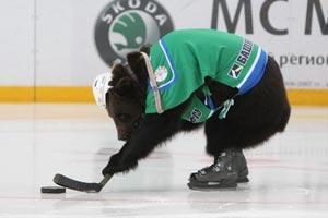 Bear-playing-hockey_medium