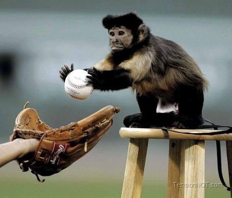 Monkey-baseball_medium