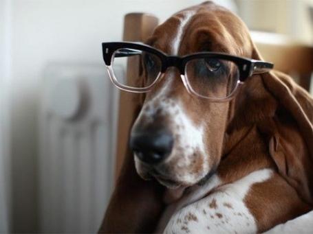 L-hipster-hound_medium
