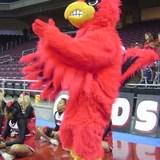 My_cardinal