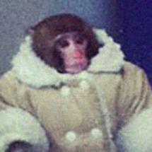 Ikea_monkey