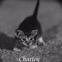Charley_