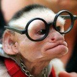 Monkeyglass