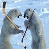 Polar_bears_hockey