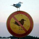 No-seagulls