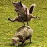 Leapdogavatar