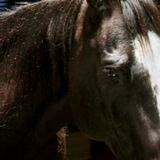 Bad-horse