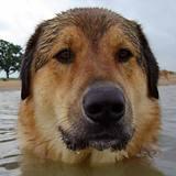 Water_dog