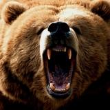 Bear_roar