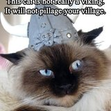Viking_cat