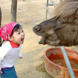 Little_girl_yelling_at_donkey