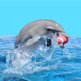 Dolphin_football_square