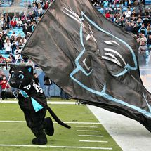 Carolina_panthers_mascot_wallpaper_-_800x600