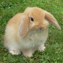 Bunnyquadrat
