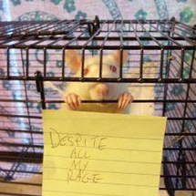 Rat-in-a-cage