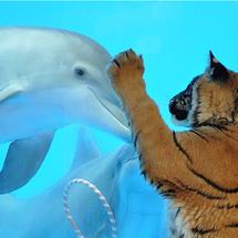 Bengal_dolphin
