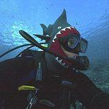 Shark_hat