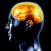Add-brain