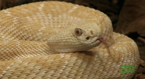 Top Chef Texas Ep  3: Have Your Snake and Eat it Too - Eater