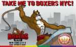 2011_10_boxers.jpg