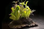 salad-centerpiece-alinea-150.png