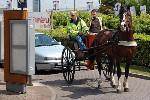 Horse-Mcdonald%27s-England.jpg