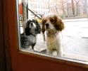 2011_04_dogswindow.jpg