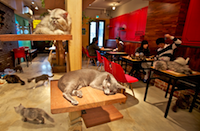 catcafe.png