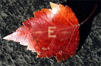 leaf911.jpg
