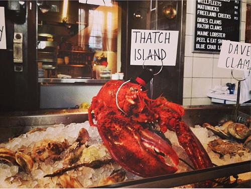 lobster500.jpg