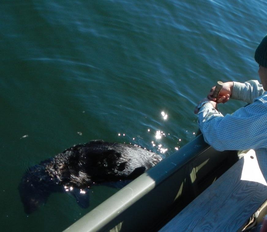 sea otter hunt
