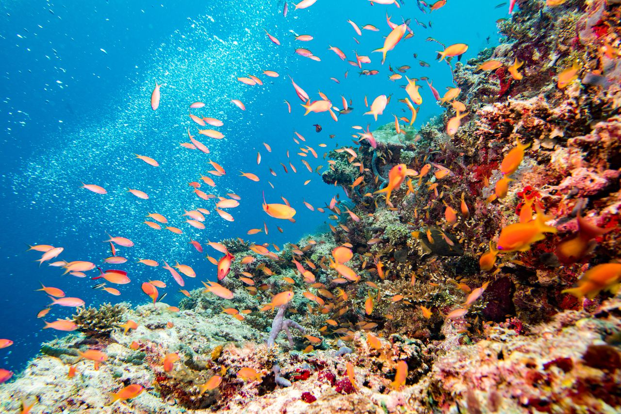 Coral Reefs Fish Recovery
