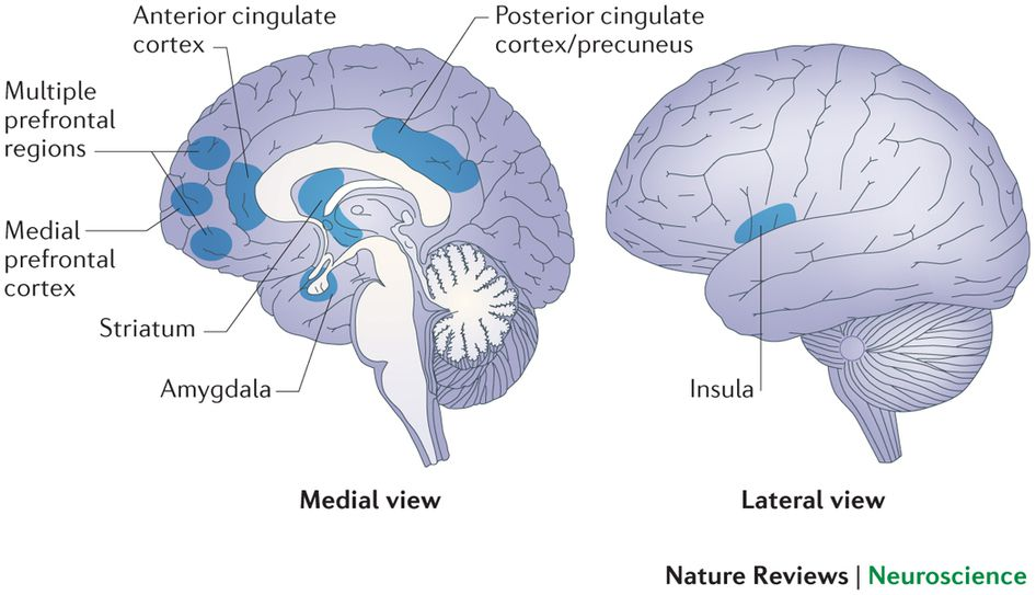 an analysis of different structures and areas inside the brain While the mri research mainly focused on brain structures,  men have stronger connections between brain areas for  they may become different over time as boys.