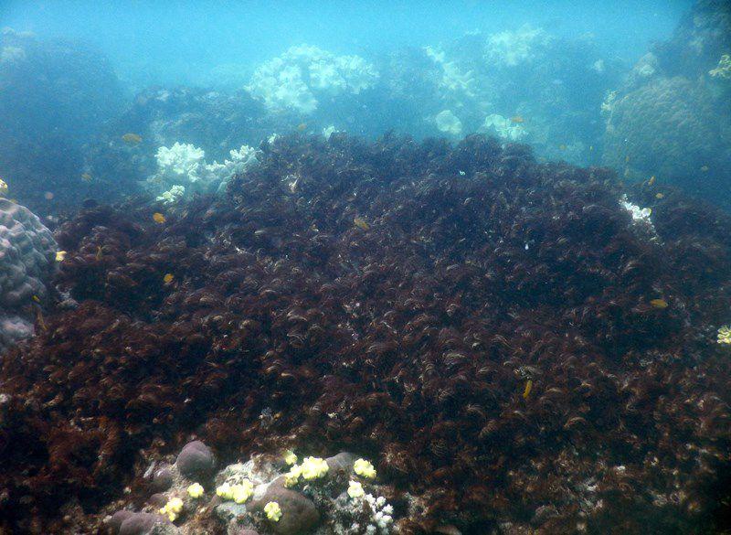 Lizard Island Reef Dead