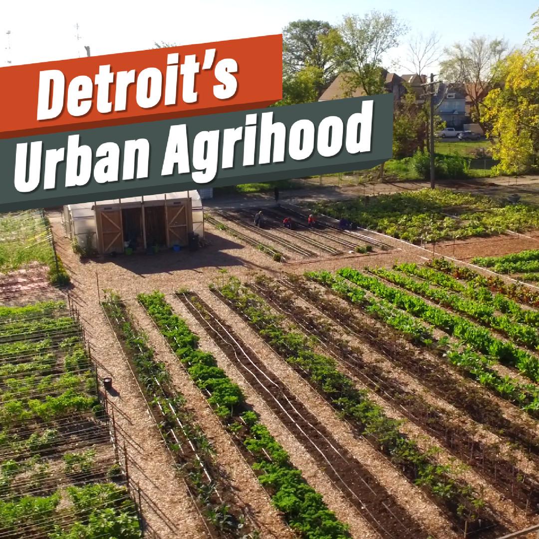 Take a stroll through Detroit\'s urban agrihood - Curbed Detroit