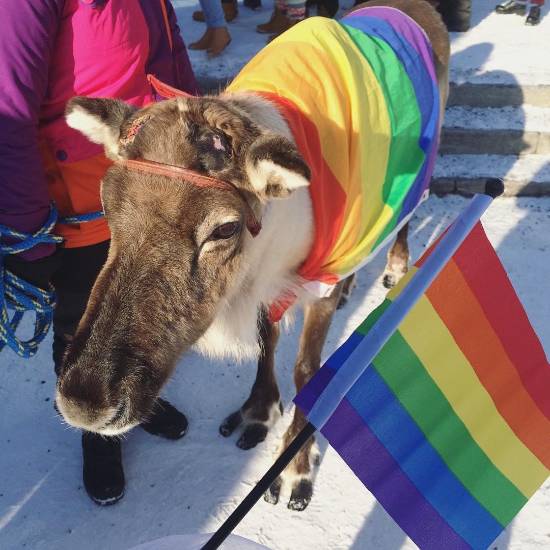 helsinki gay pojat seuraa rovaniemi